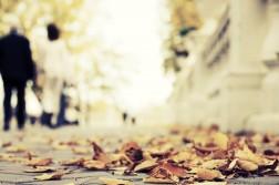 autumn-in-park-1